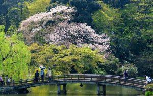 پارک ملی شینجوکو